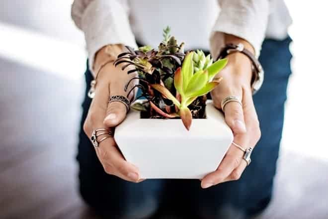 Girl holding pot of succulents - Types of Succulents