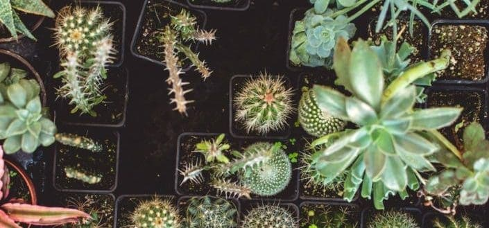 How to care for succulents - Why is knowing how to care for succulents so important?.jpg