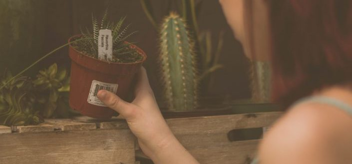 Girl holding a pot of succulent