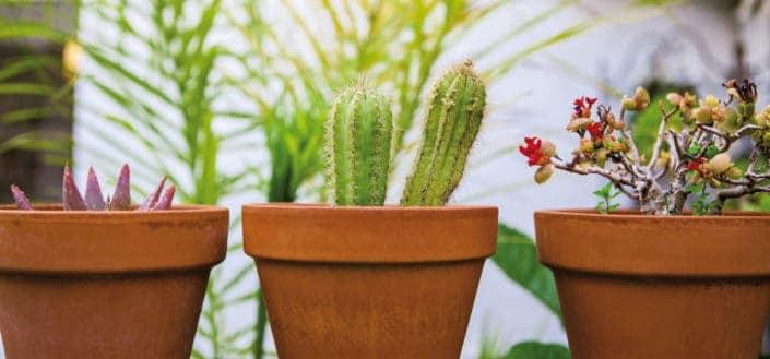 Types of Succulent Plants - best outdoor succulents.jpg