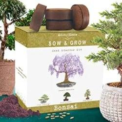 Unique Housewarming Gifts - Nature's Blossom Bonsai Tree Kit