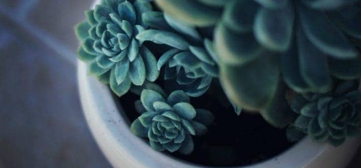 What are succulents? - how to care for succulents.jpg