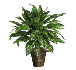 housewarming gifts for men - Silver King With Basket Silk Plant