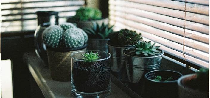 how to water succulents - How Often Should I Water Indoor Succulents_