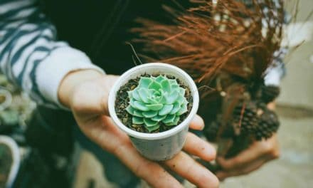 How To Water Succulents – An easy to follow guide.
