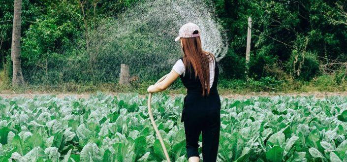 Best Garden Hose.jpg