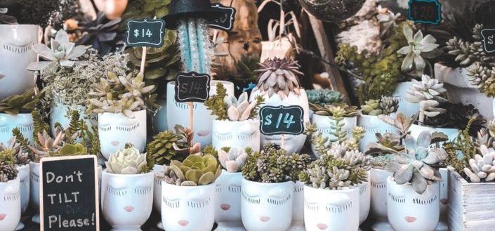 Indoor Succulent Plants - How to Pick The Best Indoor Succulent Plants.jpg