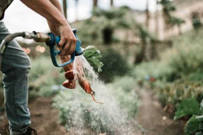 best garden hoses - post.jpg