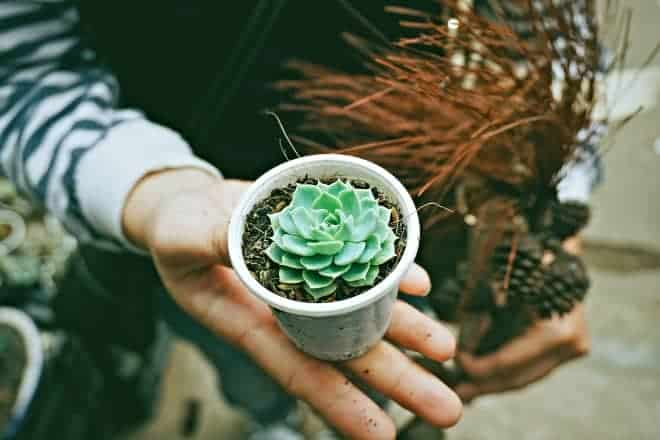 How to care for succulents - Main