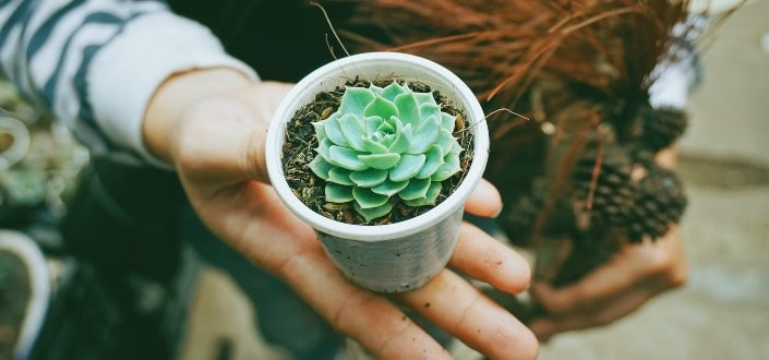 how to plant succulents - Why is knowing how to plant succulents so important_