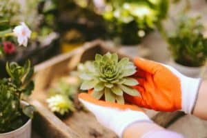 how to plant succulents - featured1 (1)