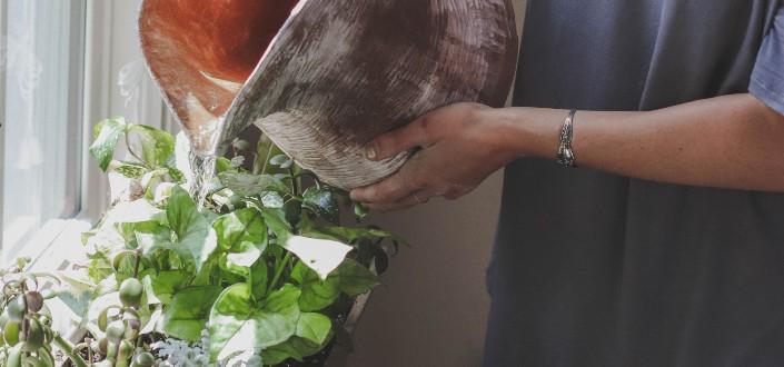 how to water succulents - How To Water Succulents (1)
