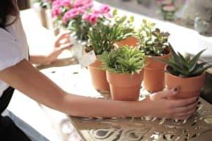 Outdoor succulents - featured