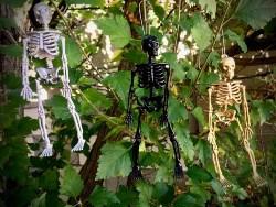 Skeleton Ornaments (1)