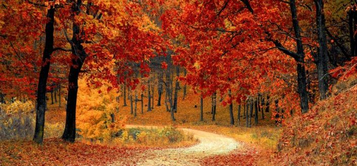 How to Pick the Best Fall decorations - Incorporate the colors of fall.jpg