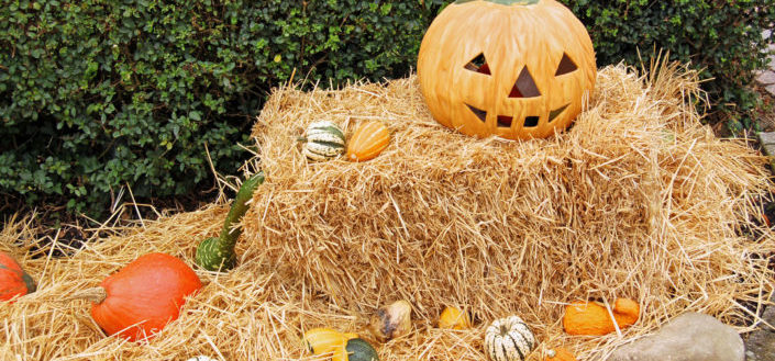 Outdoor Halloween decorations - Outdoor Halloween yard decorations.jpg