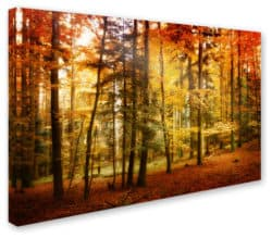 kitchen decorations for fall - 'Brilliant Fall Color' Canvas Art
