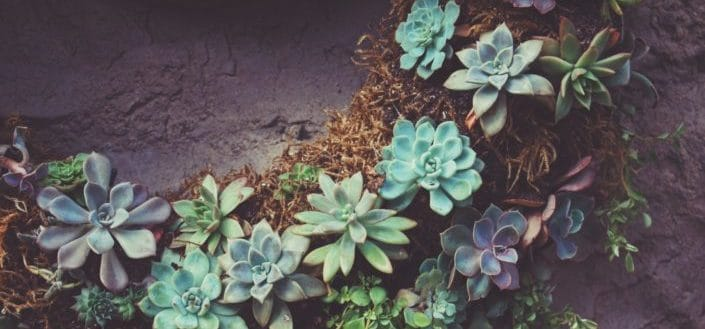 how to propagate succulents - How To Propagate Succulents.jpg