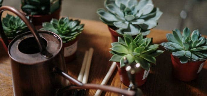 how to propagate succulents - Know how to water succulents.jpg