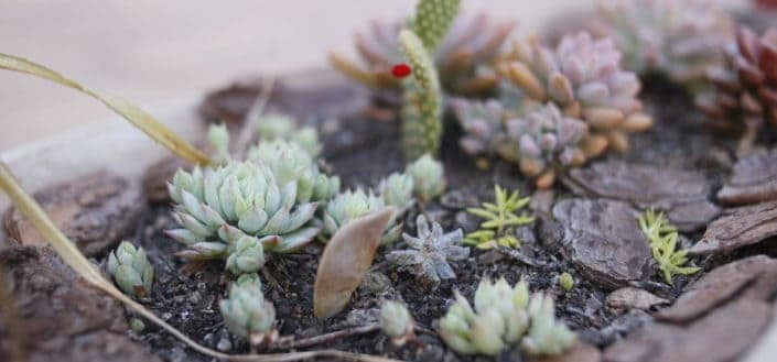 how to propagate succulents - Know the different types of succulents.jpg