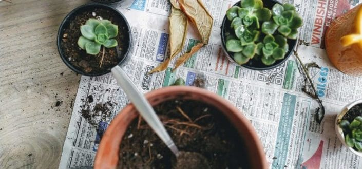 how to propagate succulents - Propagating from leaves or cuttings.jpg
