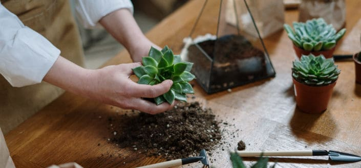 how to propagate succulents - Rooting your new succulents.jpg