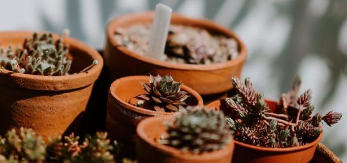 Succulents inside different pots