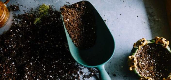 Soil Requirements for Elephant Bush.jpg