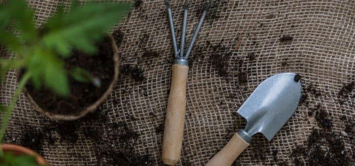A mini shovel and rake beside a plant