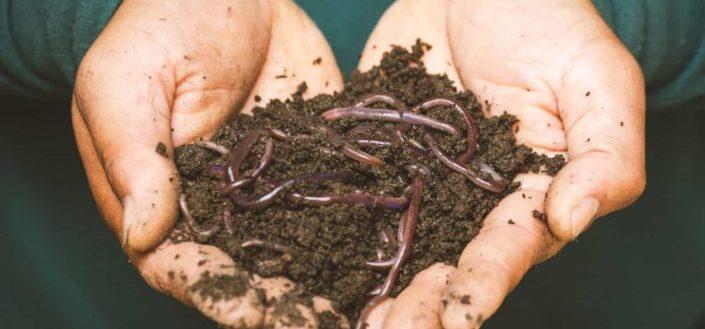 Step #9. Know When To Fertilize YourHaworthiaFasciata