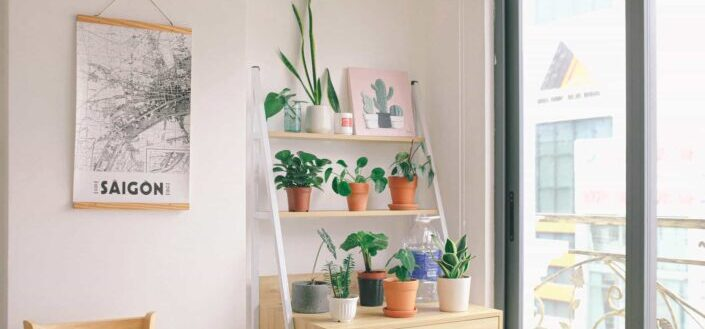 a table with different kinds of indoor plants