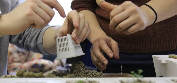 two sets of hands working with soil