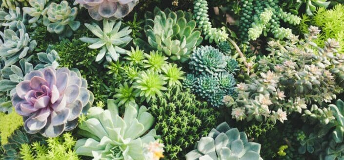 Different types of succulents.