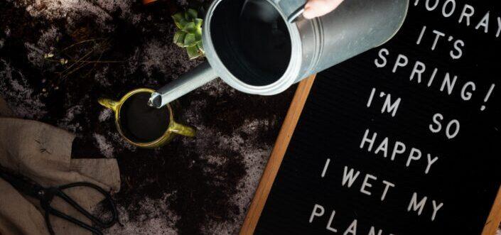 Watering a succulent pot.