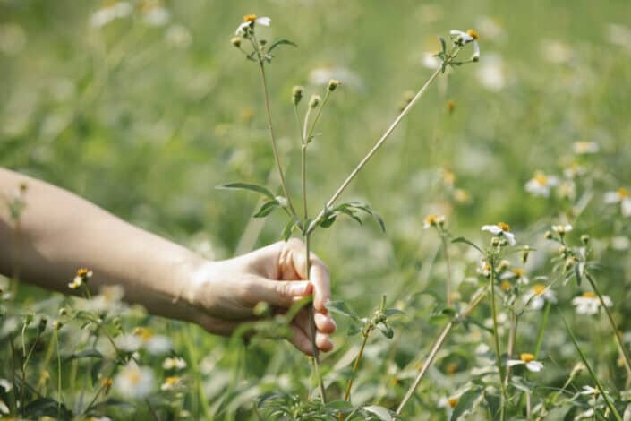 a flowering plant being handpicked by a woman