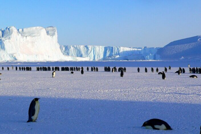 lots of penguins on Ice