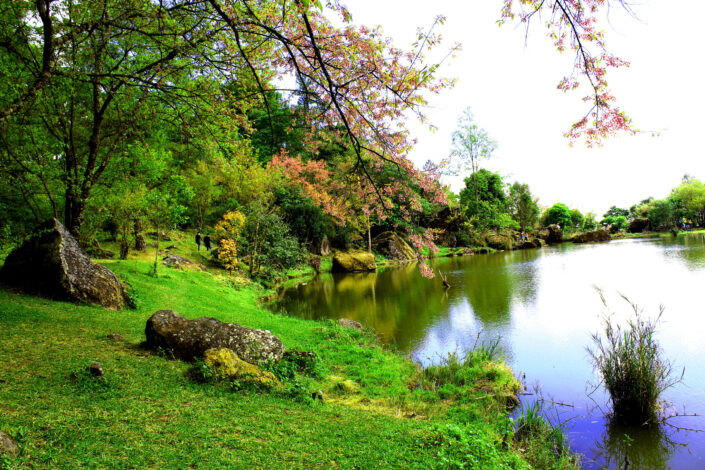 Lakeside with lots of green plants, trees and grass