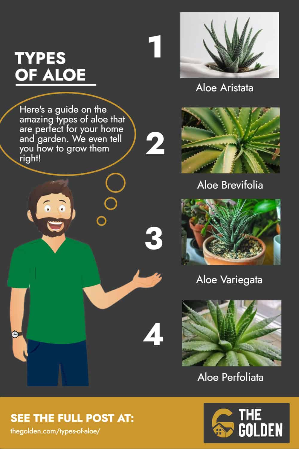 Infographic facts about types of aloe