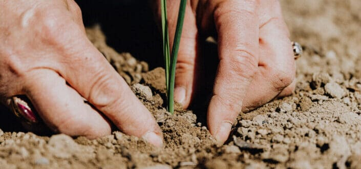 Person planting seedling into soil
