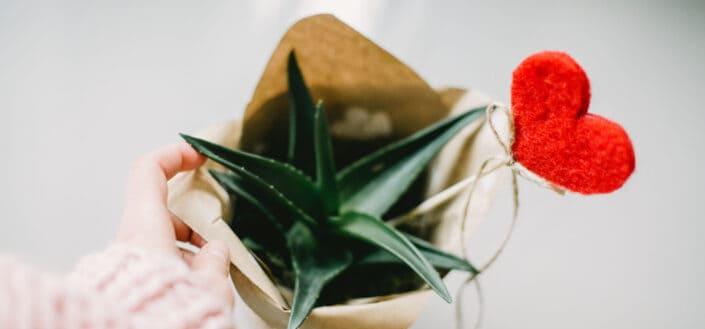 Aloe Vera inside a paper bag