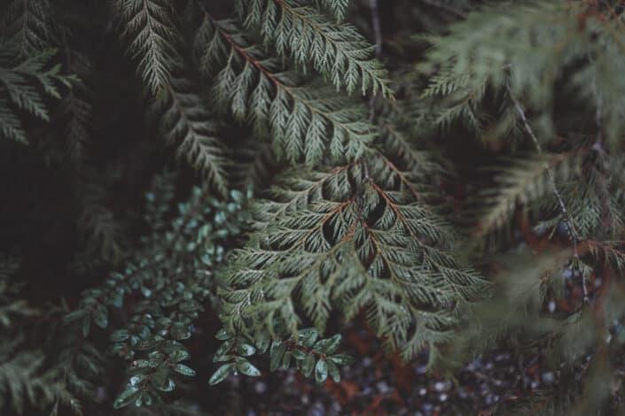 Green Plants of fern