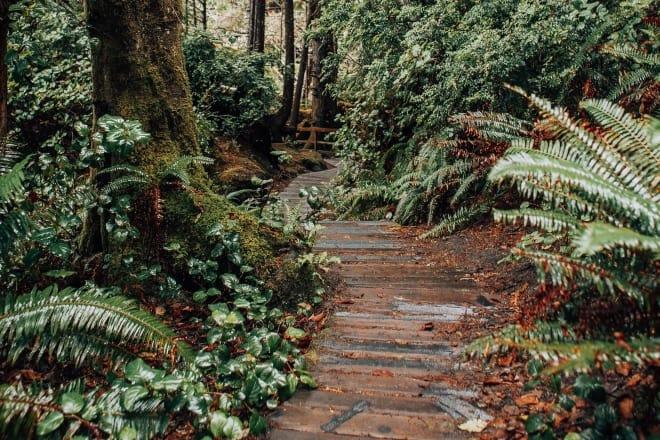 types of ferns - Brown Pathway Between Green Trees