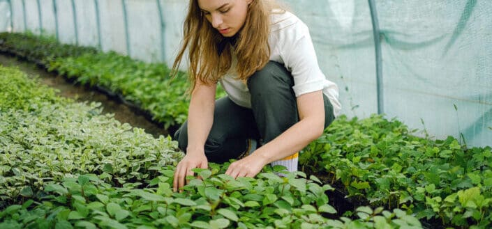 Woman Taking Care Of Green Plants