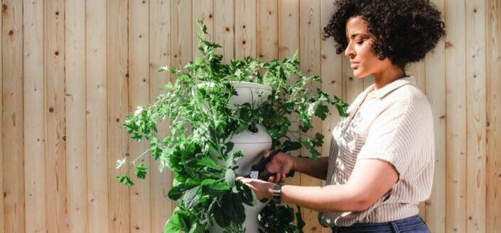 A woman trimming her plants outside