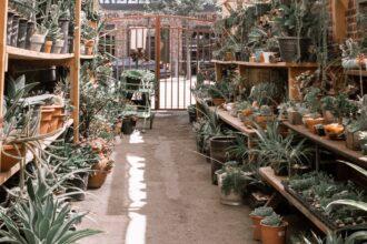 <thrive_headline click tho-post-13538 tho-test-4>16 Amazing Types of Aloe – Advice On How To Grow Them Right</thrive_headline>