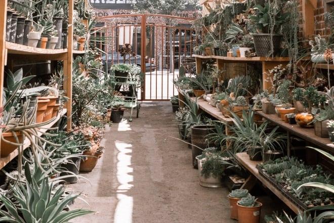 Types of Aloe - MAIN