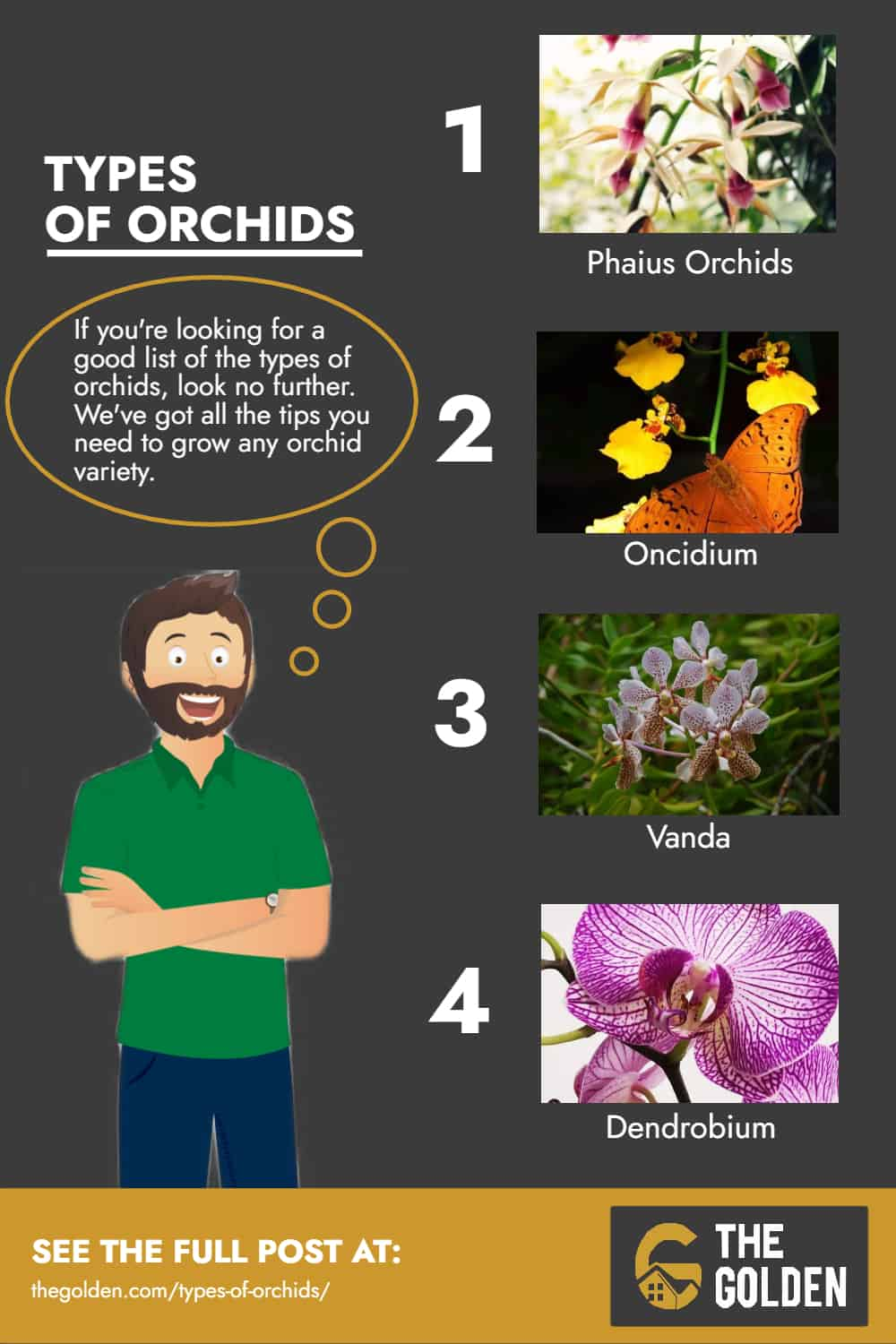 Types of Orchids Infographic