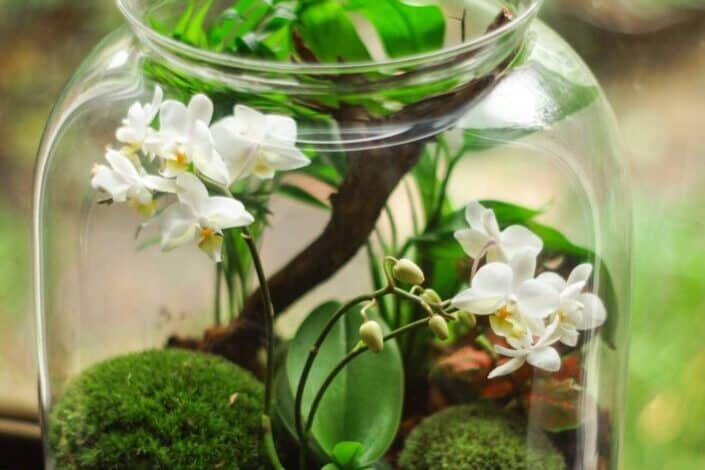 Clear Glass Terrarium With White Petaled Flowers